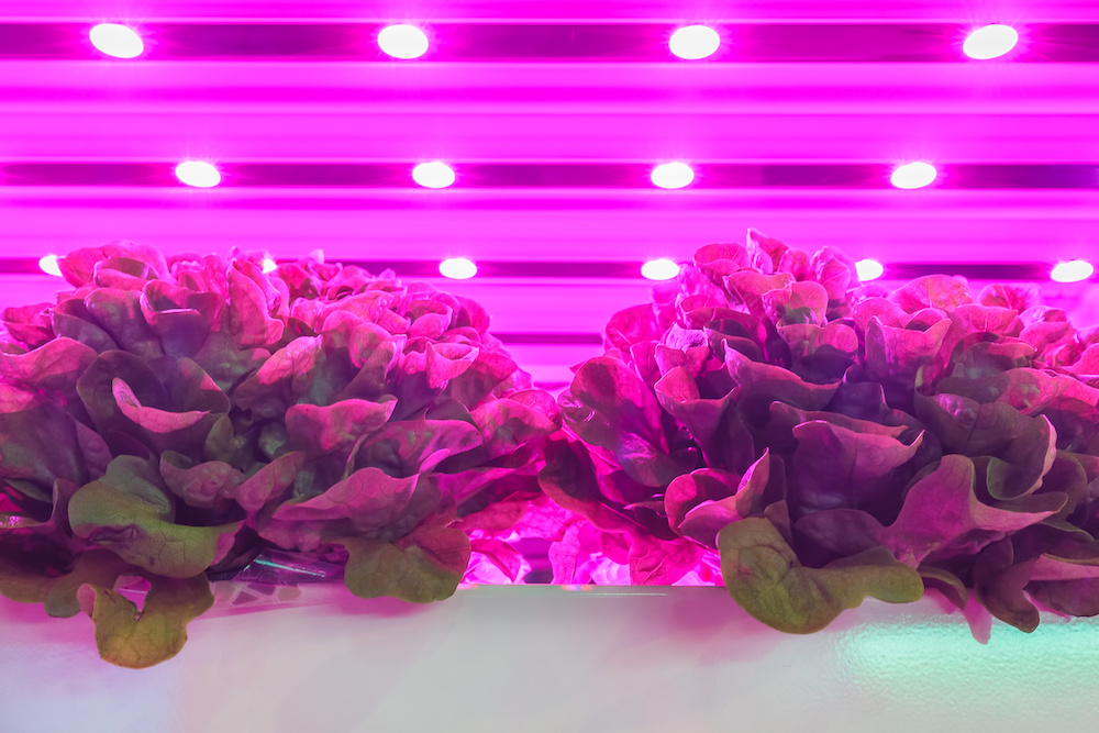 agritech investment in vertical farming